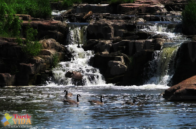 And there were geese everywhere! Falls Park in Sioux Falls, South Dakota