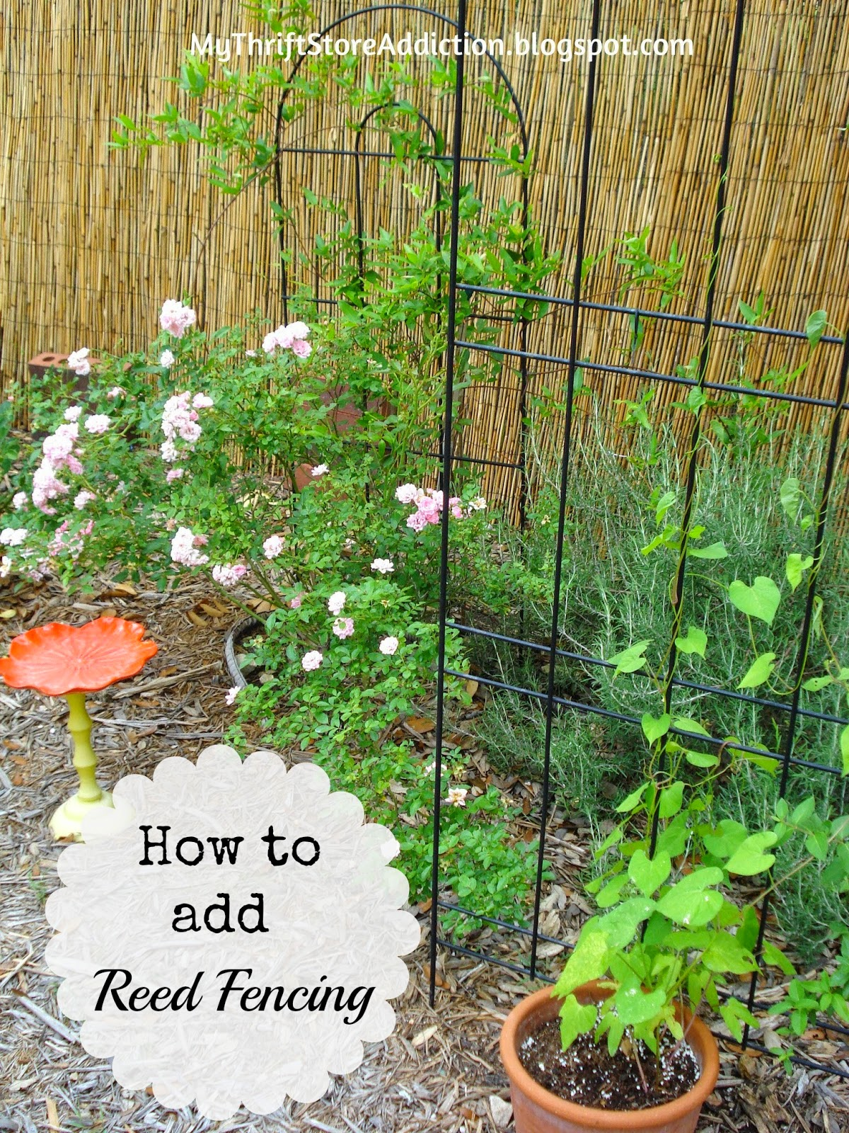 DIY reed fence tutorial