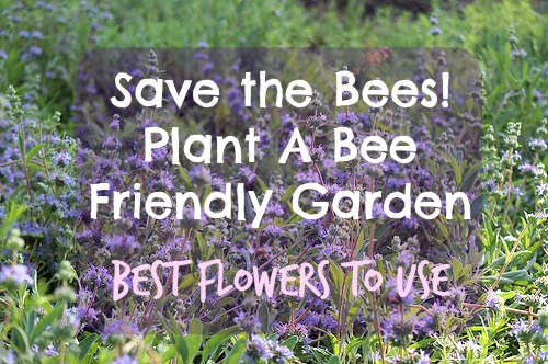 Save The Bees! Plant A Bee Friendly Garden