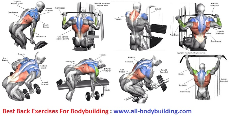 Best Back Exercises For Bodybuilding