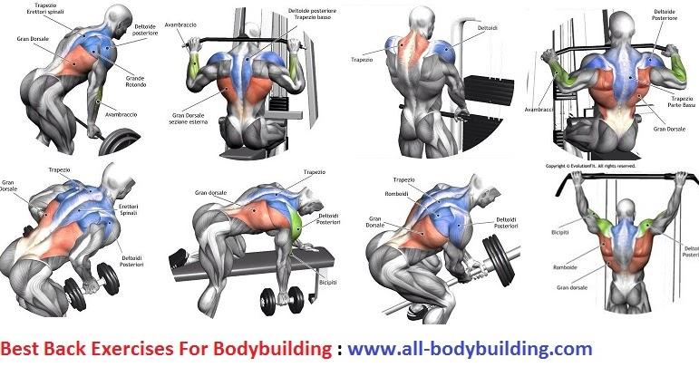 Best Back Exercises For Bodybuilding - all-bodybuilding.com