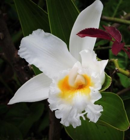bella flor blanca con amarillo centro amarillo
