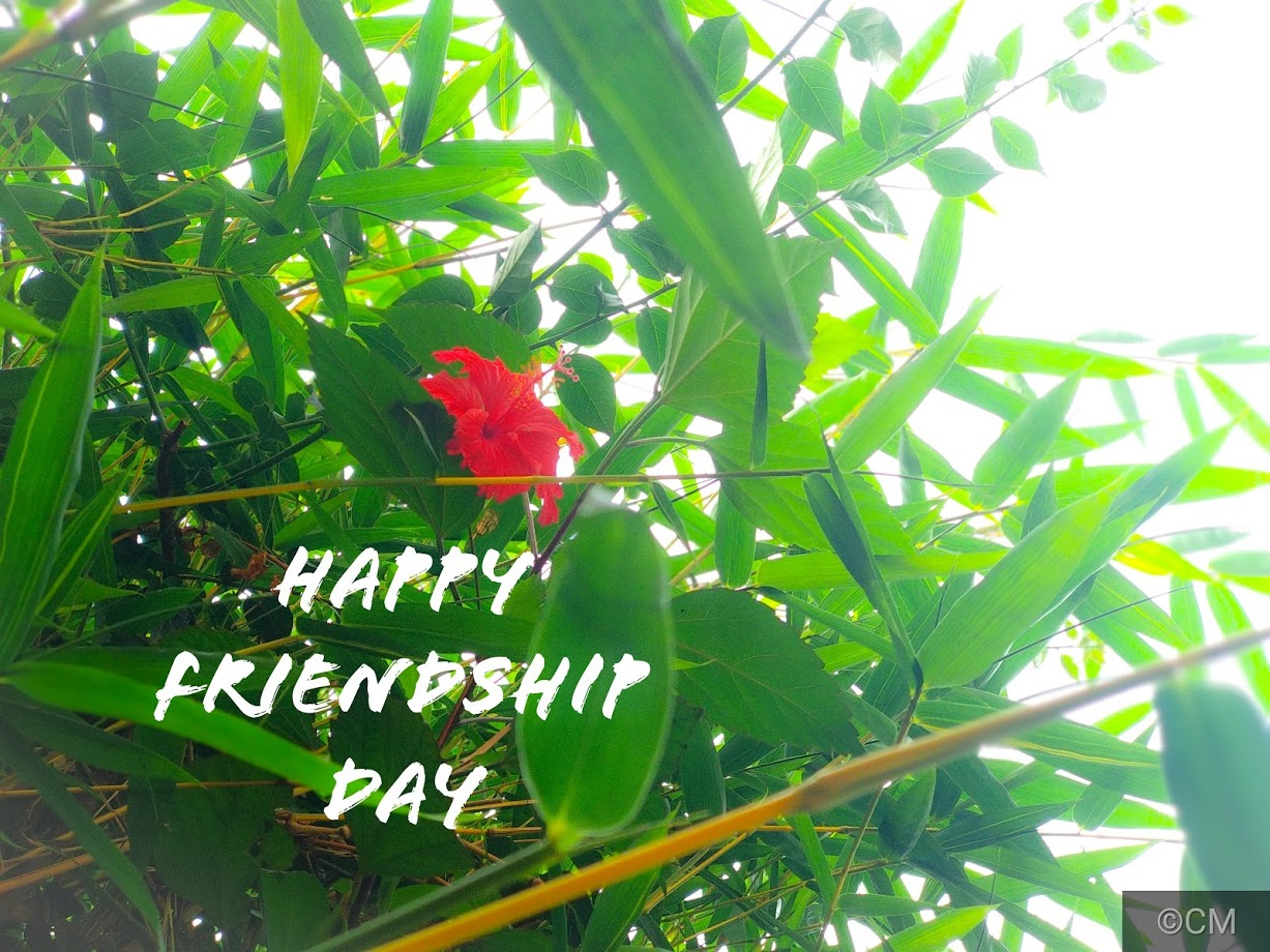 Friendship Day 2018 Messages Wishes Images Sms Whatsapp