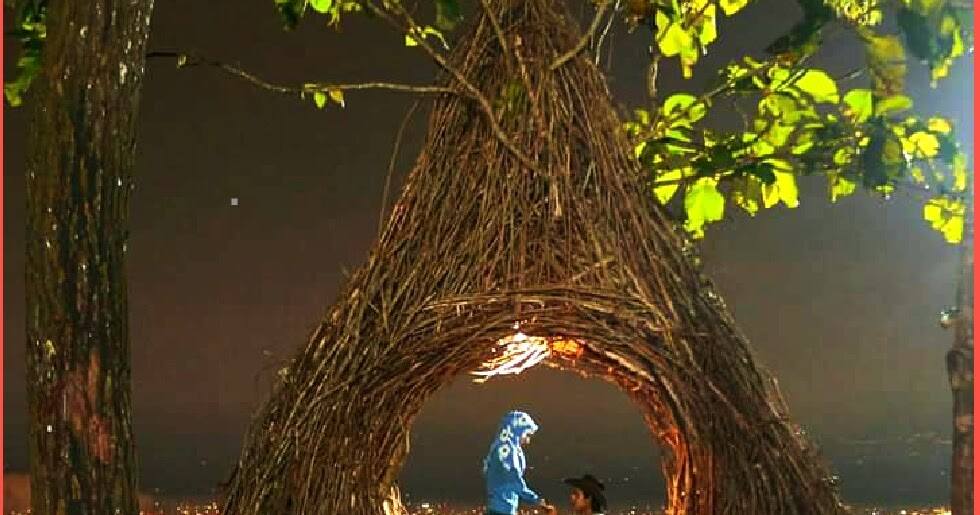 Porter Rinjani Romantisnya Hutan  Pinus Pengger di Malam