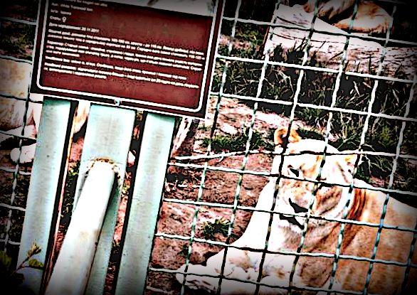 Akibat Karantina Wilayah, Kebun Binatang di Ukraina Alami Krisis Keuangan
