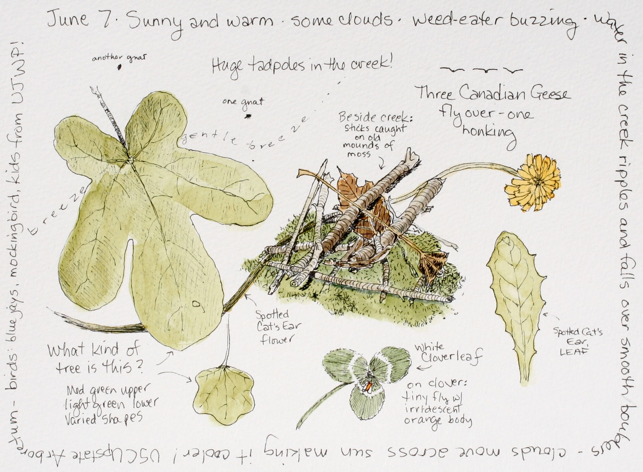 nature journaling journal classes journals middlewood sketchbook botanical watercolor today journalling inspiration sketch science garden drawing wissahickon watershed valley pages