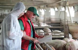Kiểm tra định kỳ sức khỏe thú trong trang trại. Ảnh minh họa