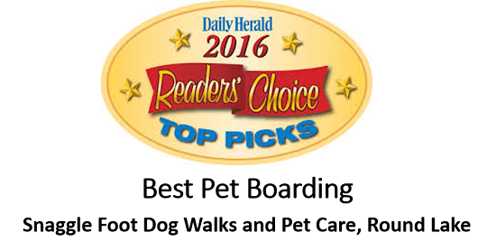 Snaggle Foot Dog Walks and Pet Care Wins 2016 Readers Choice Award