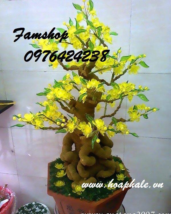 Goc bonsai cay hoa mai o Dai La