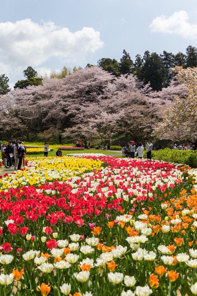 Share Experience Tour to Japan Flower Park