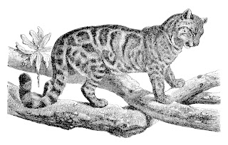 animal cat image antique illustration digital download