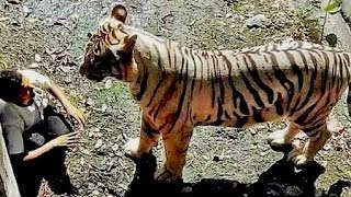 Tiger Kills a Student on 23.Sept.2014