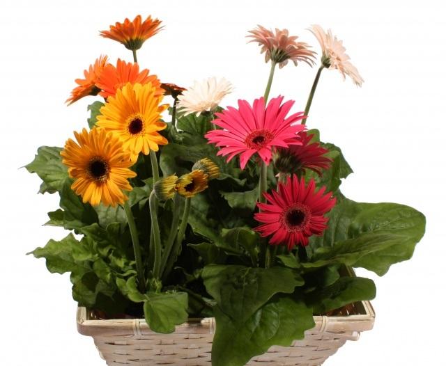 điện hoa giá rẻ tphcm