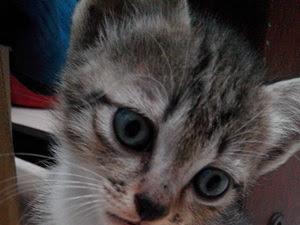 Salam Jumaat : Mimpi Doa Seekor Kucing