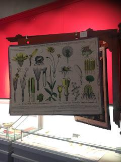 ピサ植物園の植物博物館の掛図