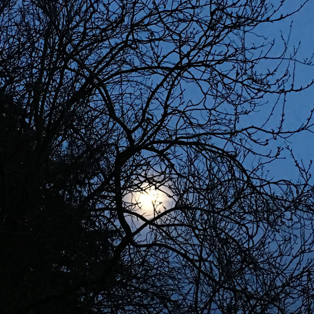 moon through trees #silentsunday #mysundayphoto
