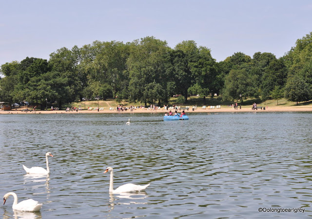 White Swans, Hyde Park London, England