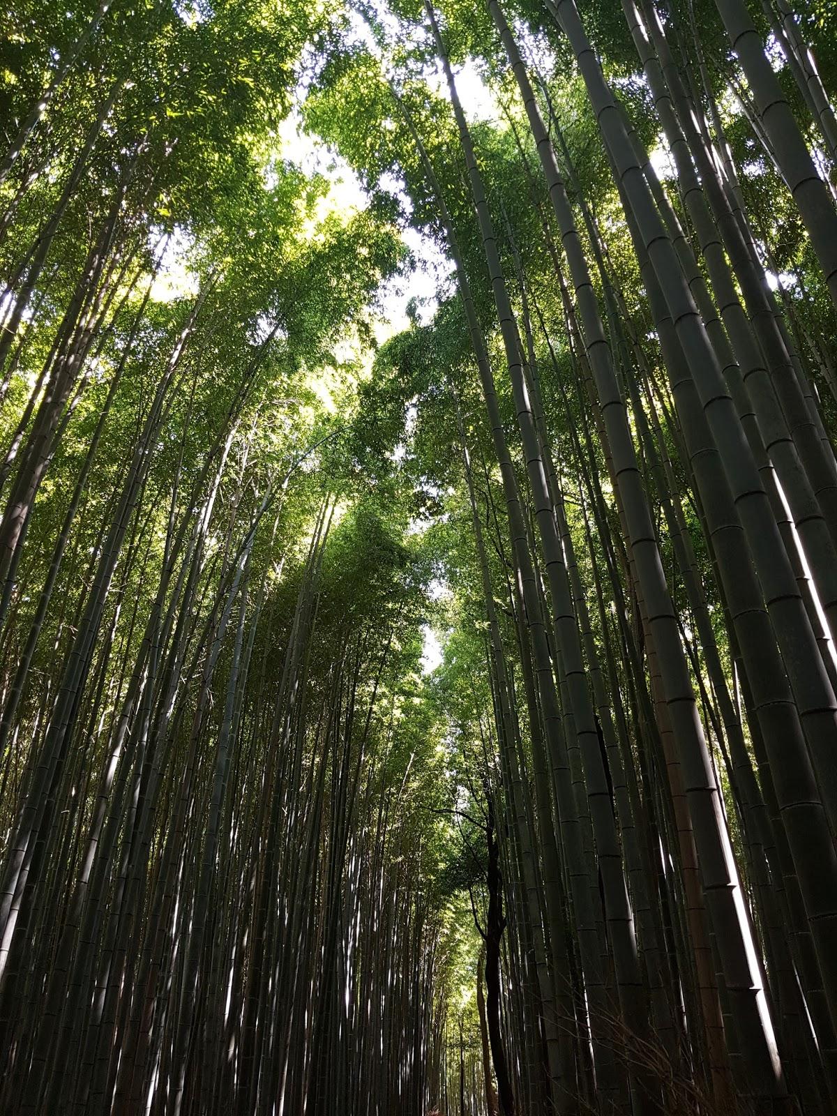 Arashiyama Bamboo Grove Canopy