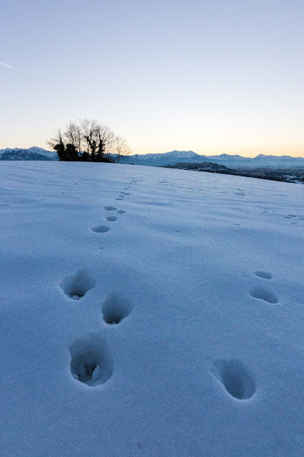 tramonto su mondovì con impronte di lepre