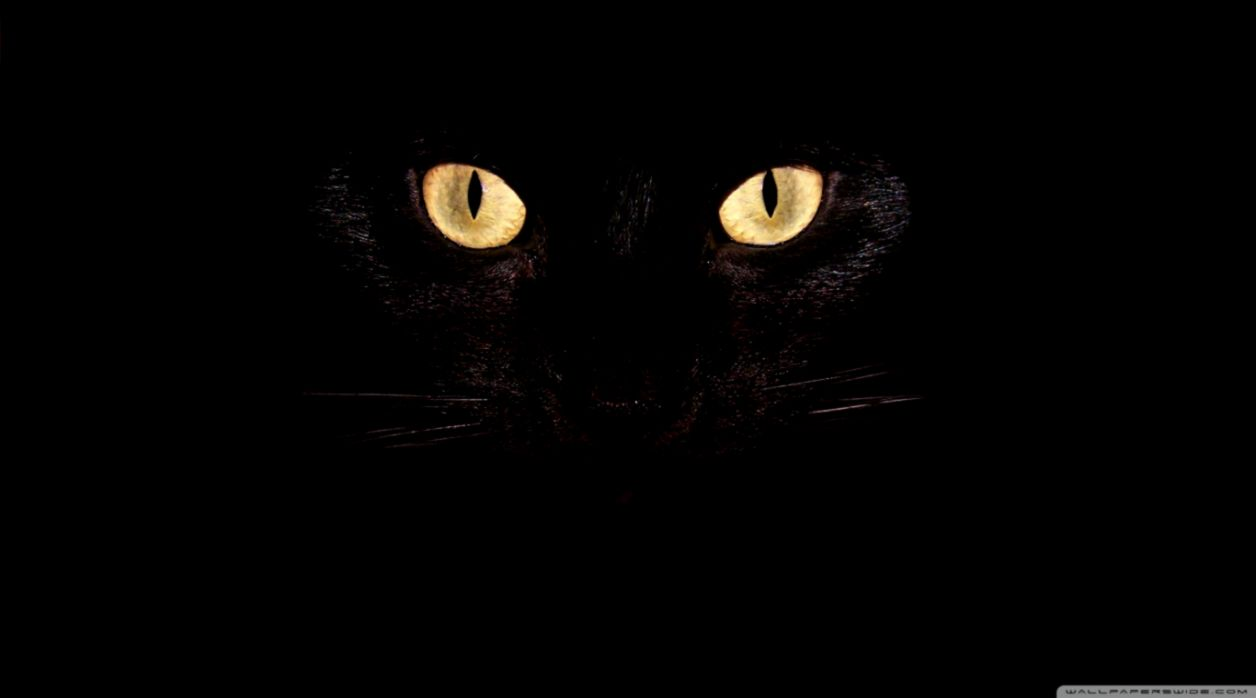Cat Eyes Look Hd Wallpaper Wallpapers Sinaga