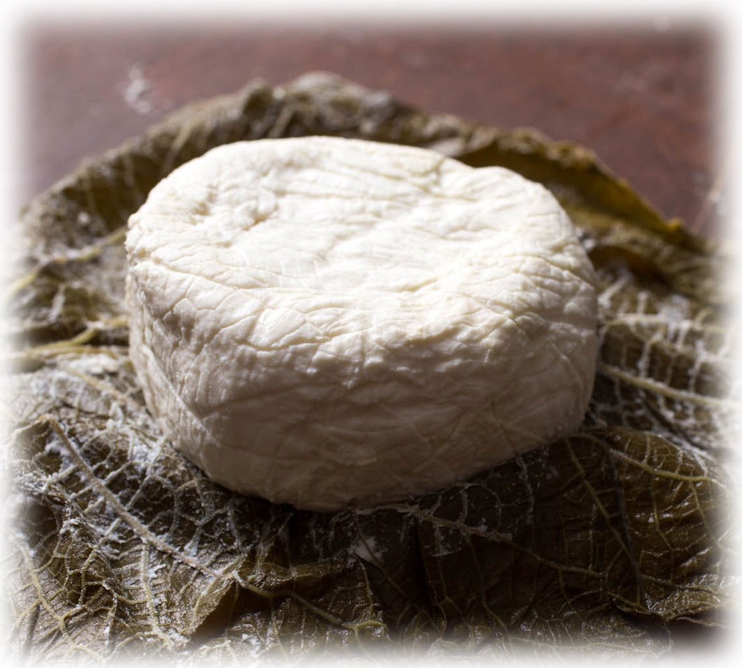 Todo sobre quesos - Mundoquesos: Hoja Santa