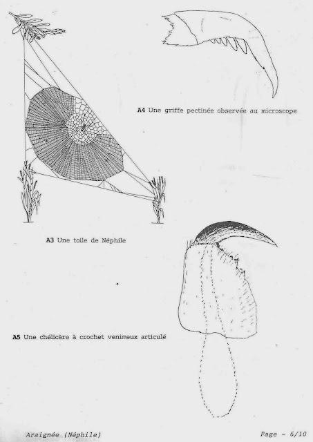 Le ons de choses l 39 araign e des jardins nephila inaurata la r union - Araignee des jardins en 6 lettres ...