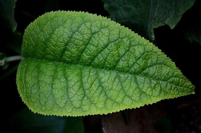أنواع البناء,الأيض في النبات,النبات,البكتيريا الزرقاء,الطحالب الخضراء المزرقة,الأكسجين,الطول الموجي,الضوء المرئي,الأشعة تحت الحمراء,الضوء الأحمر,البلاستيدات لاخضراء