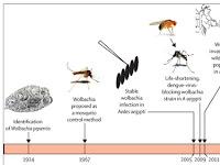 Eliminate Dengue: Tantangan Indonesia, Mengendalikan Demam Berdarah dengan Bakteri Wolbachia