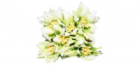 https://scrapkowo.pl/shop,kwiaty-materialowe-6szt-zielen-irys-z-narcyzem,8514.html