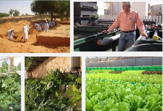 Aquaponics in the desert