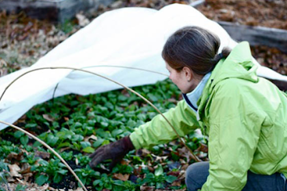 Winter Gardening Tips That Will Save Your Garden