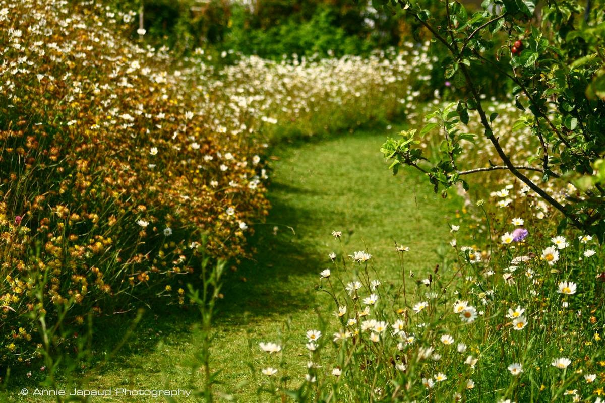 path in the green,  among the flowers