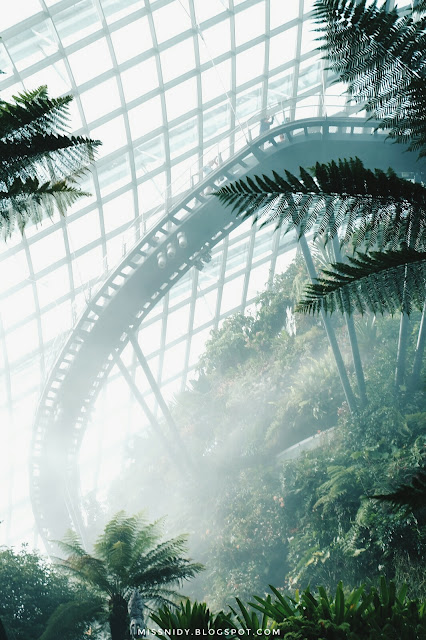 mystical forest at garden by the bay