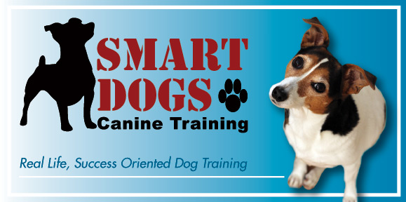 Using Positive Relationship Puppy & Dog Training