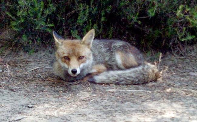 raposa toscana parque - Pegar uma praia na Toscana