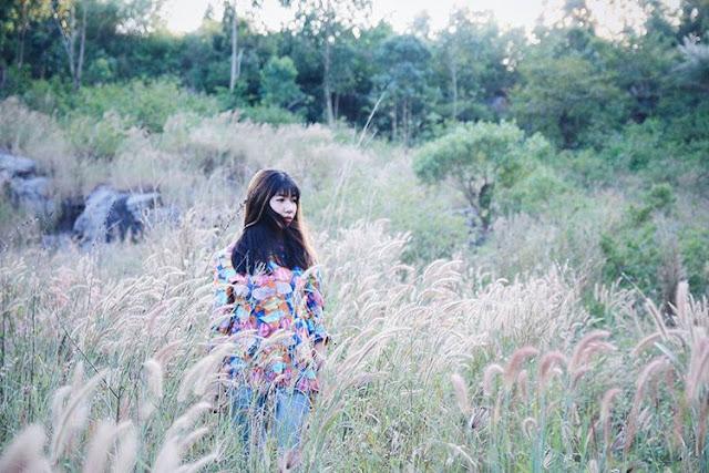 Top 45 hình ảnh đẹp về hoa cỏ may, Ý nghĩa hoa cỏ may là gì?