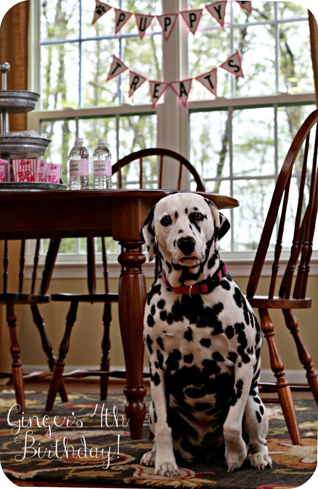 Keeping My Cents 162 162 162 Dog Birthday Party Ideas
