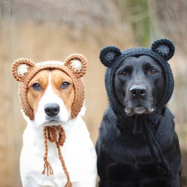 Собаки в шапочках