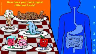 http://kitses.com/animation/swfs/digestion.swf