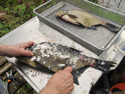 Kalan Perkaaminen