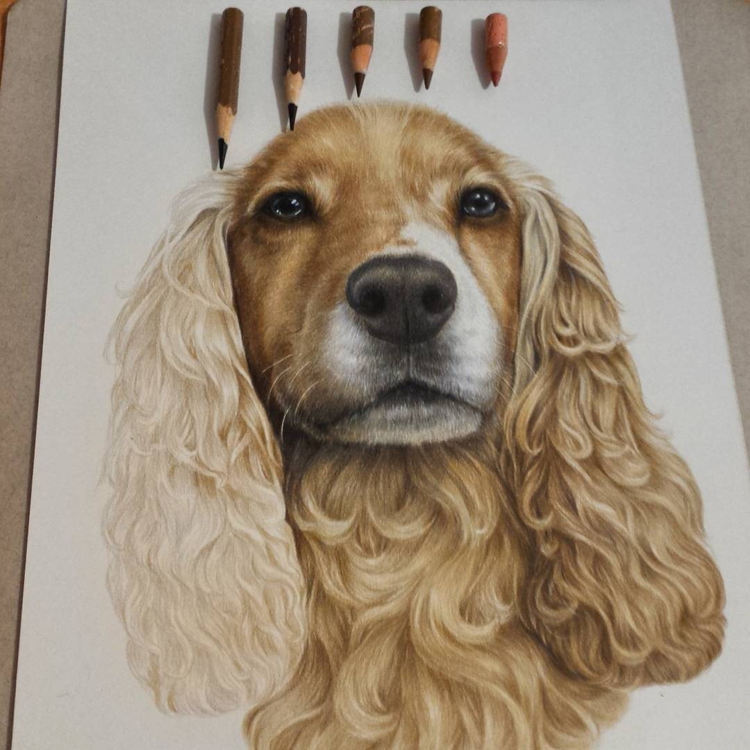 11-Cocker-Spaniel-Tatjana-Bril-Domestic-and-Wild-Animal-Drawings-www-designstack-co