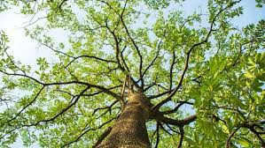 Arti Mimpi Jatuh Dari Pohon