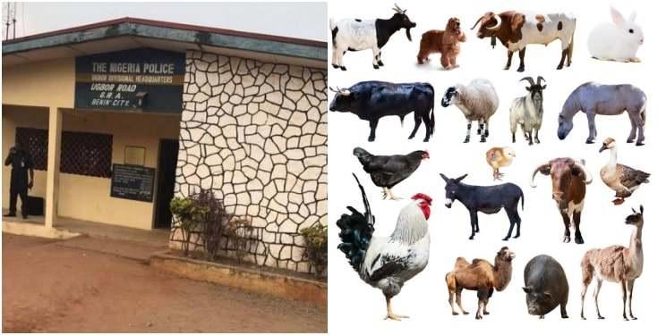 Police Receive List Of Animals To Sacrifice For Detaining Chief Priest In Benin