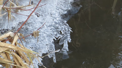 Penelopedia: Nature and Garden in Southern Minnesota: Ice Forming on a Frigid Morning