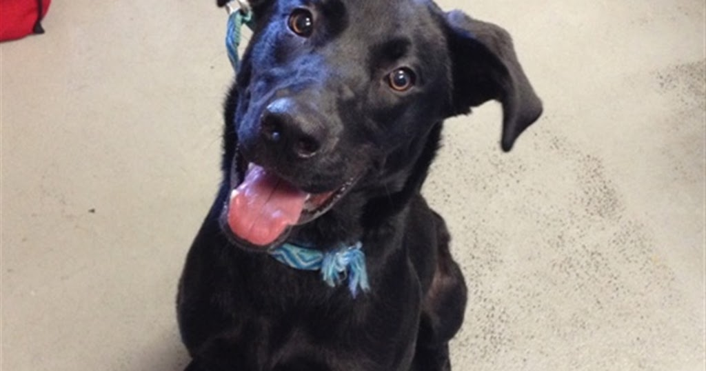 Dogs For Adoption Shelter In Trouble