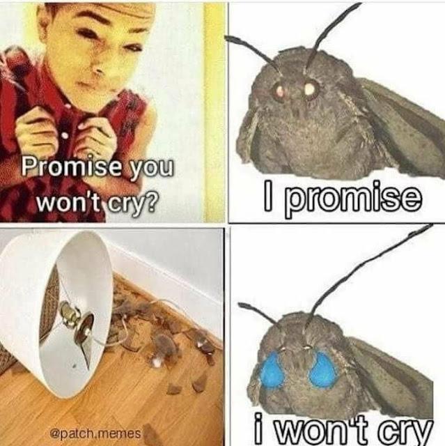 Dank Memes 31