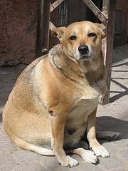 natürliches abführmittel hund