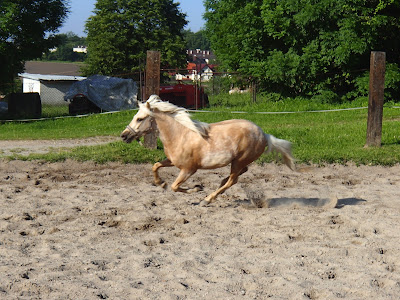 konie, kucyki, kucyki się bawią, końskie zabawy