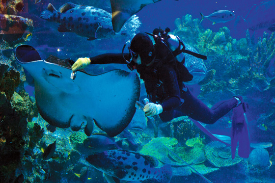 Mengembara dunia ikan di Aquaria KLCC