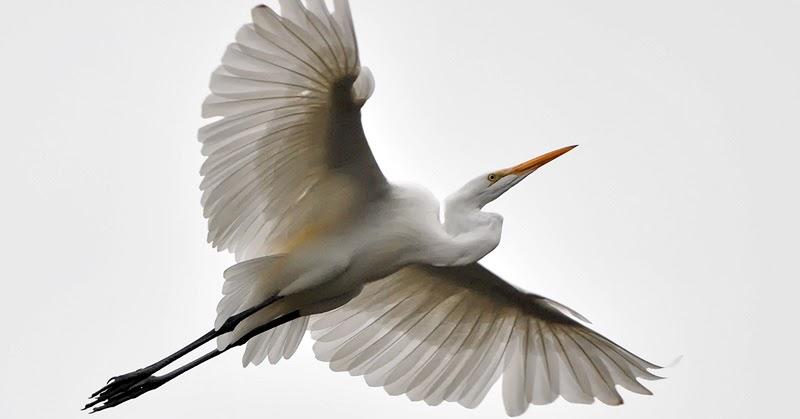 a white heron ap essay